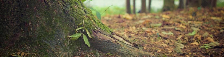 Tronco emergente con árboles al fondo