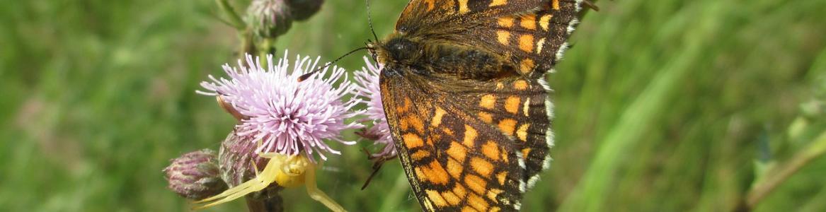 Flor, mariposa, araña