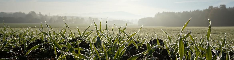 Solsticio invierno agricultura