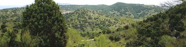 Vista senda Colmenarejo