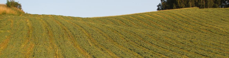 Imagen de un campo agrícola