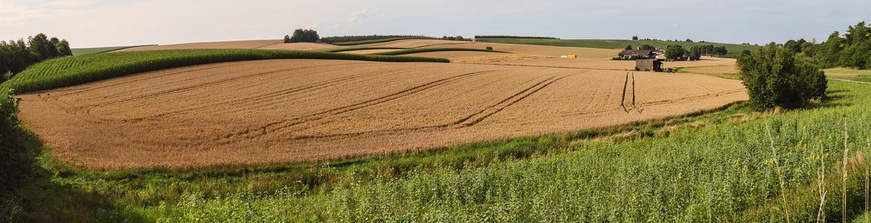 Imagen de campos de cultivo