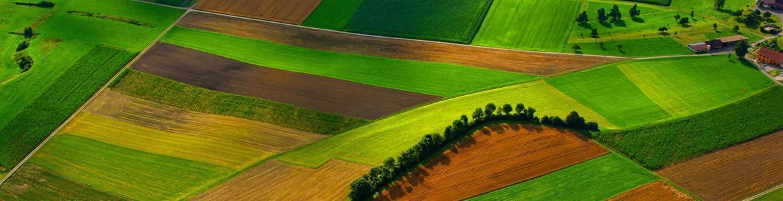 Medio rural - Campos de cultivo