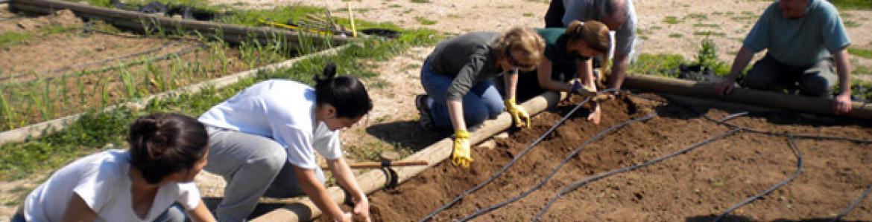 Huerto colectivo en el Centro de educación ambiental Caserío de Henares