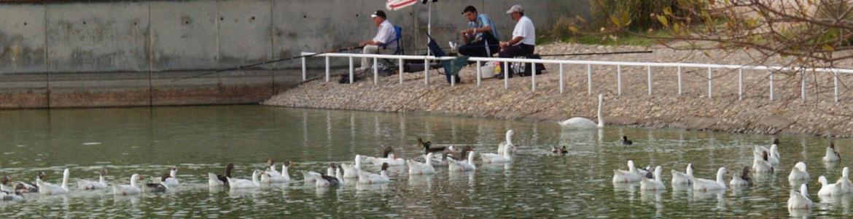 Laguna patos pescadores