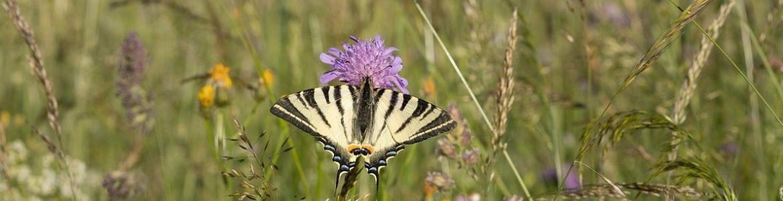 Mariposa en naturaleza con flores