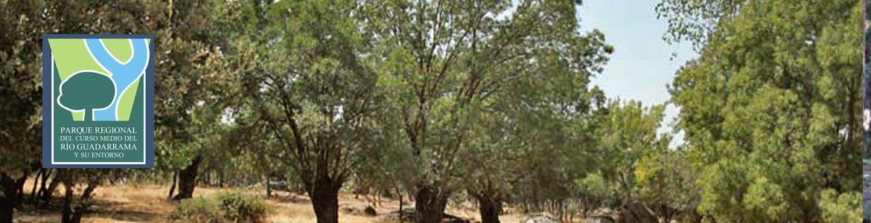 Bosque mediterráneo en la Ruta del Puente de Retamar a Colmenarejo y Galapagar en el Parque Regional del curso medio del río Guadarrama