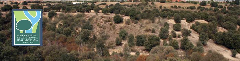 Encinares en la Senda de Villanueva de la Cañada a Brunete