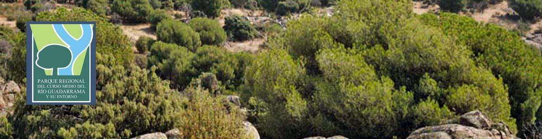 Vegetación arbustiva de la senda circular de Galapagar y Colmenarejo
