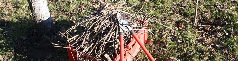 Tijeras podar ramas árbol