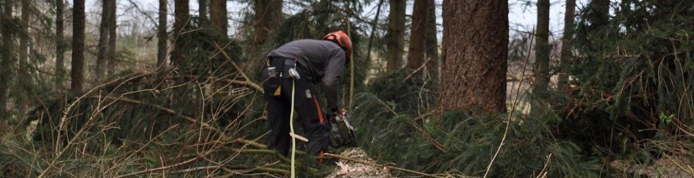 Trabajo forestal tronco árbol