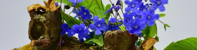 Tronco maceta flores azules