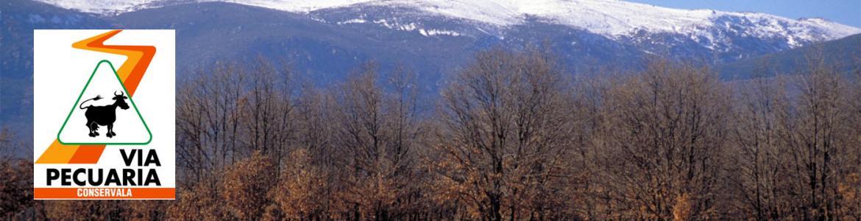 Vista panorámica de robles sin hoja con montañas nevadas al fondo