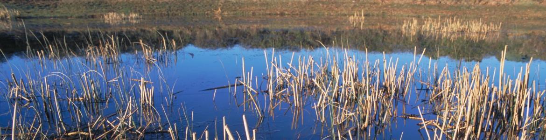 Laguna de Castrejón