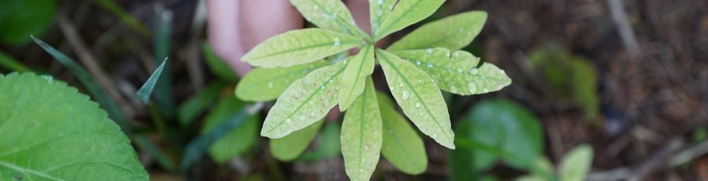 Una mano protegiendo una planta