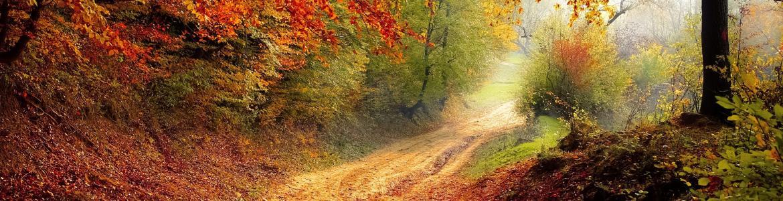 Paisaje de una camino, lleno de hojas a los lados, en medio de una montaña rodeada de arboles con tonalidad cálidos en verde, marrón, naranja