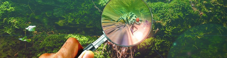 Imagen de un bosque y una lupa sobre una libélula