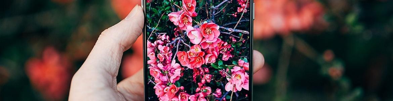Móvil, flora