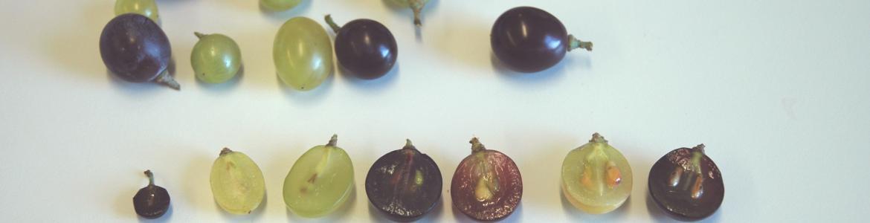 variedad de muestras de uva