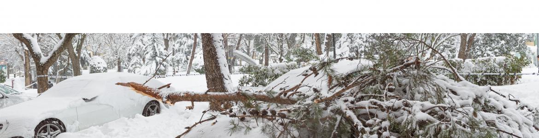danos nevada
