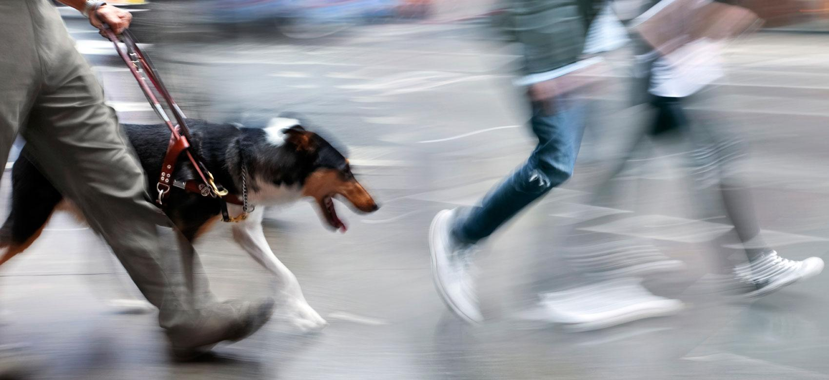 Perro guía orientando a un usuario entre la gente que camina por una calle