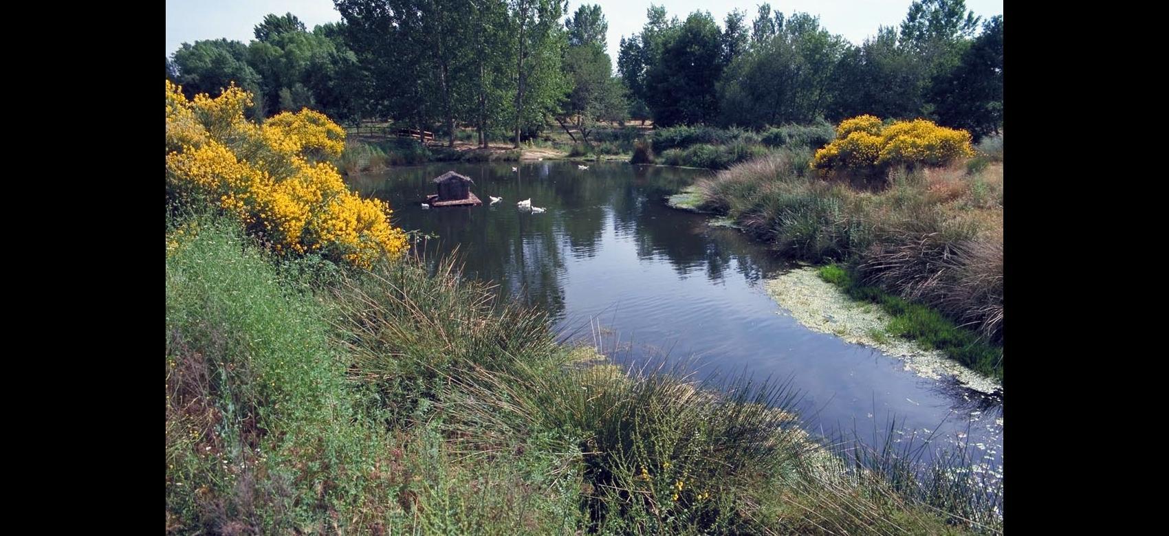 Parque Lineal del río Guadalix