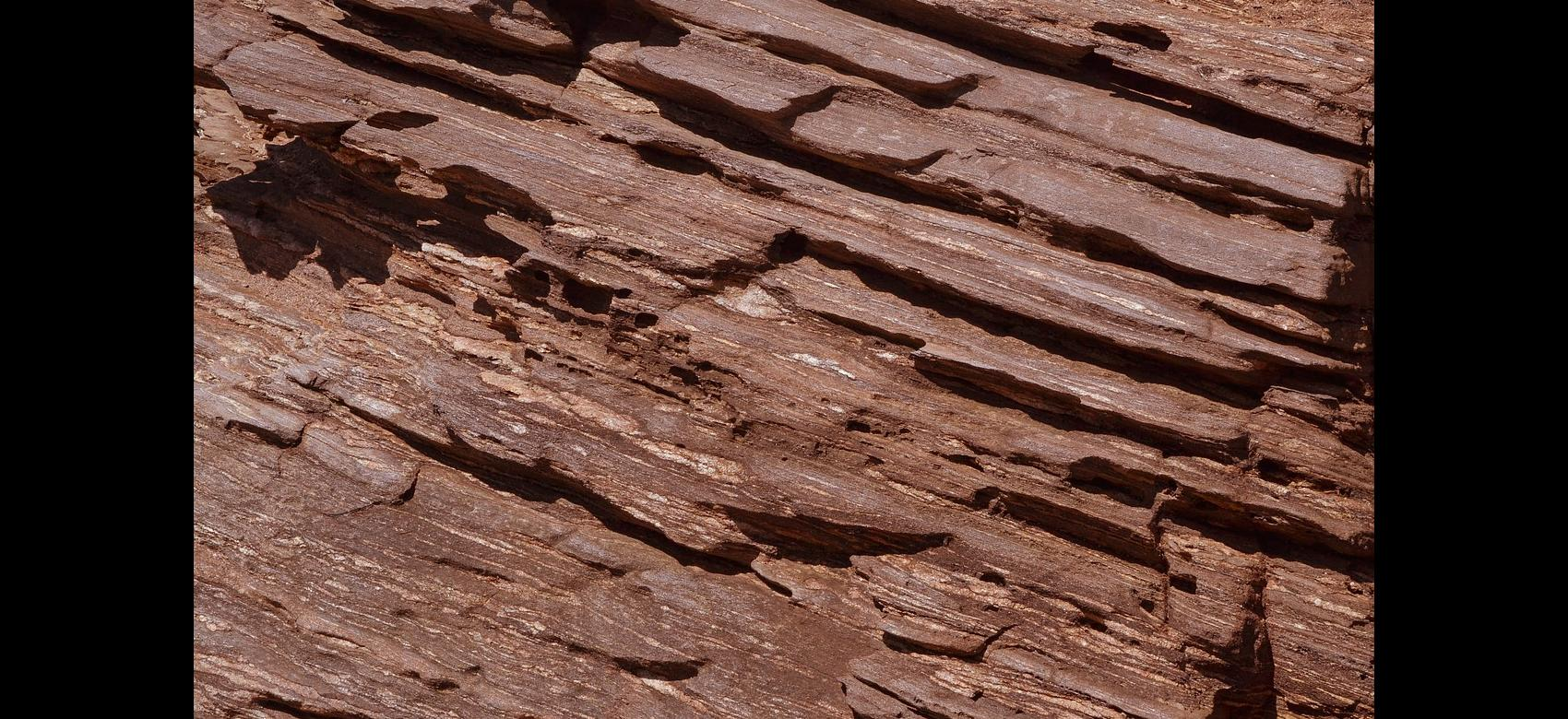 Detalle del tronco de un árbol