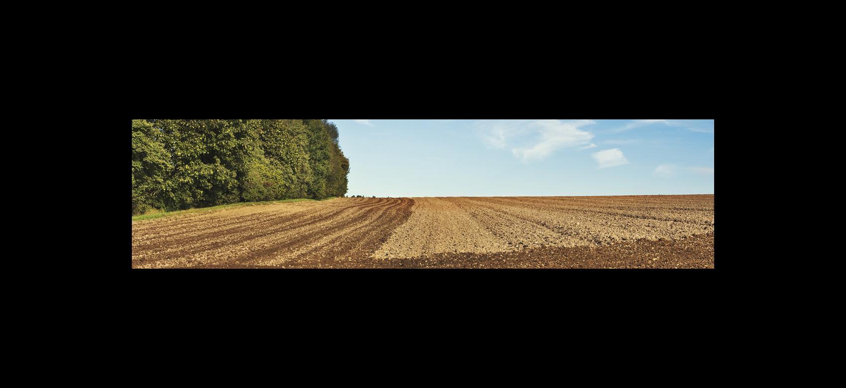 Imagen de un campo arado con árboles a un lado