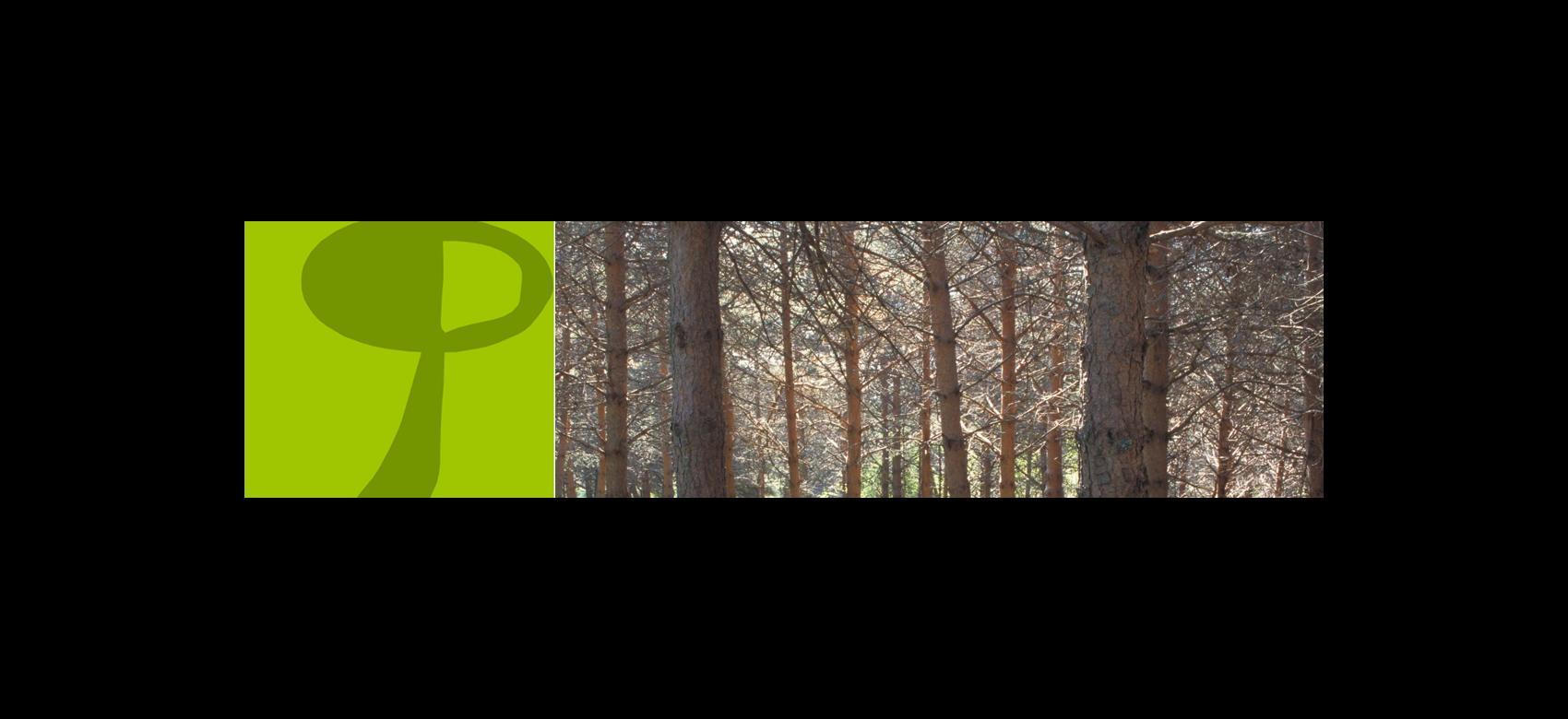 Imagen de pinos silvestres