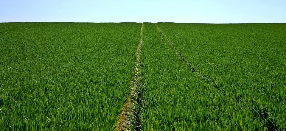 Campo de cultivos