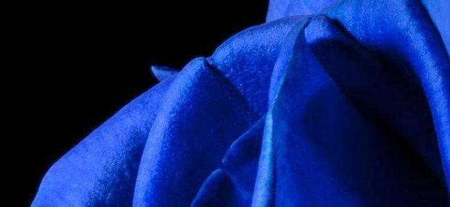 parte de rosa de color azul