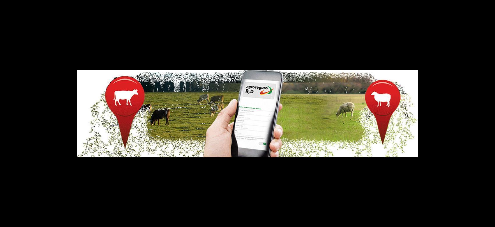 Mano con teléfono móvil con la App Retirada de animales muertos en la pantalla sobre fotografía de ganado pastando