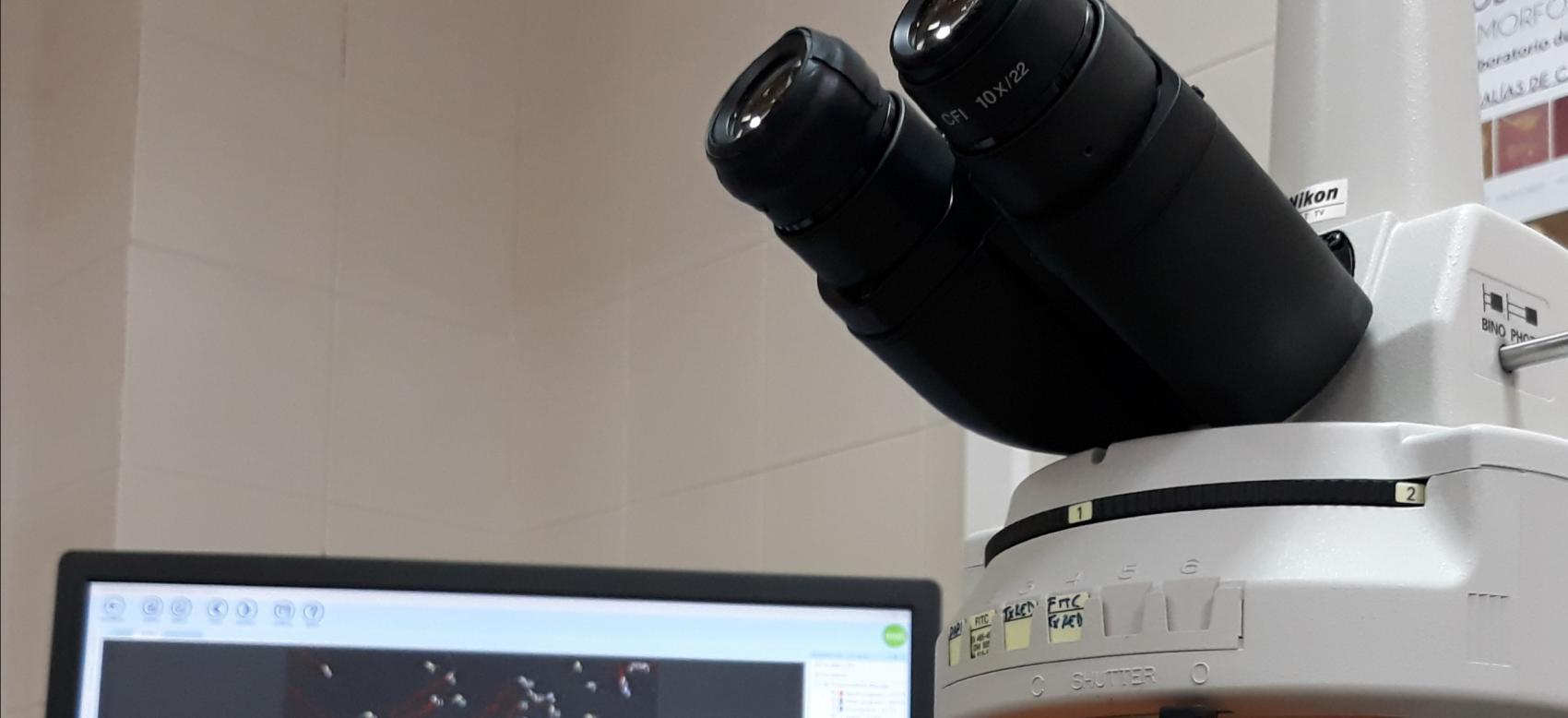 Microscopio para realizar espermiogramas y pantalla para la observación de las muestras