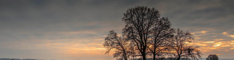 Imagen de un campo nevado con un árbol aislado