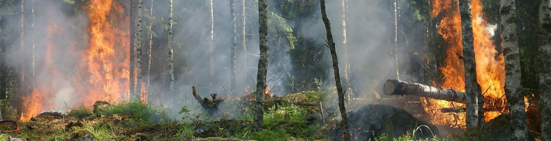 fuego_forestal.jpg