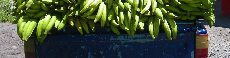 Furgoneta con plátanos y bananas