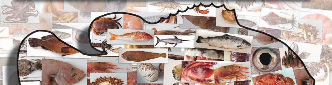 Imagen de la portada de la Guía de los principales pescados, moluscos y crustáceos comercializados en la Comunidad de Madrid