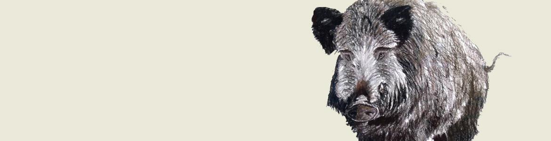 Dibujo de un jabalí