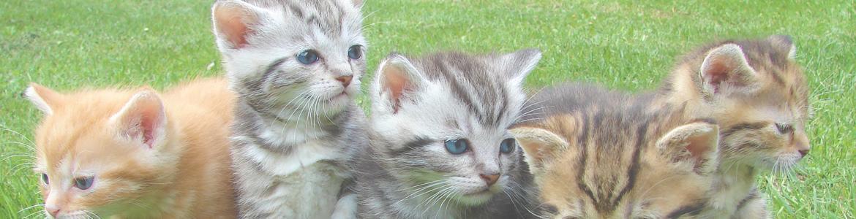 Imagen de un grupo de gatos