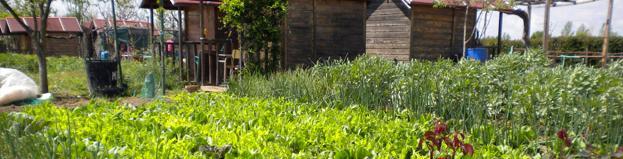 Huertos de ocio en el Centro de educación ambiental Caserío de Henares