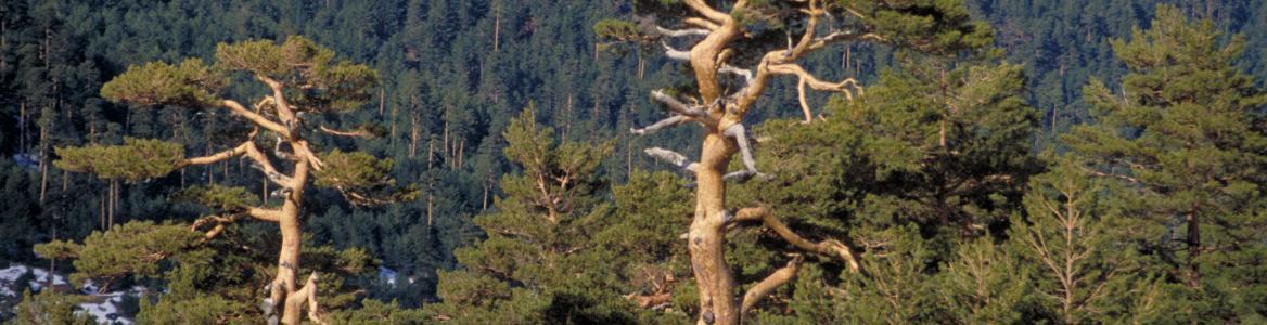 Rutas y Sendas por el Parque Nacional de la Sierra de Guadarrama