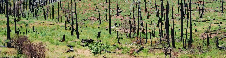 Montes forestal incendiado tras su extinción