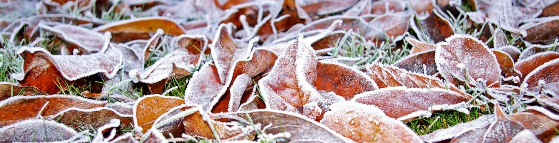 Imagen de hojas de árbol congeladas en el suelo
