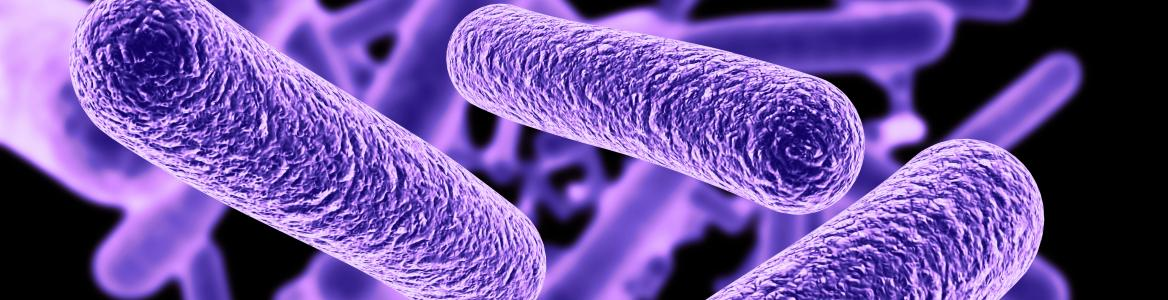 Imagen de una bacteria con tonos morados