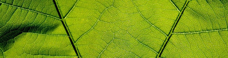 Detalle de una hoja, de color verde