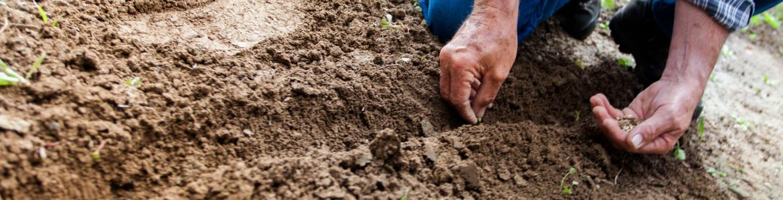 Plantando en el huerto