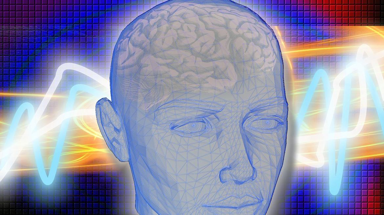 Cerebro humano (dibujo)