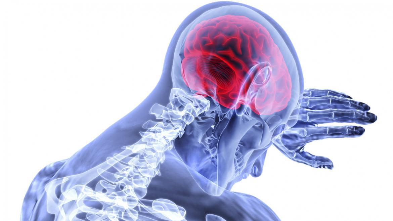 Cerebro humano. Dibujo