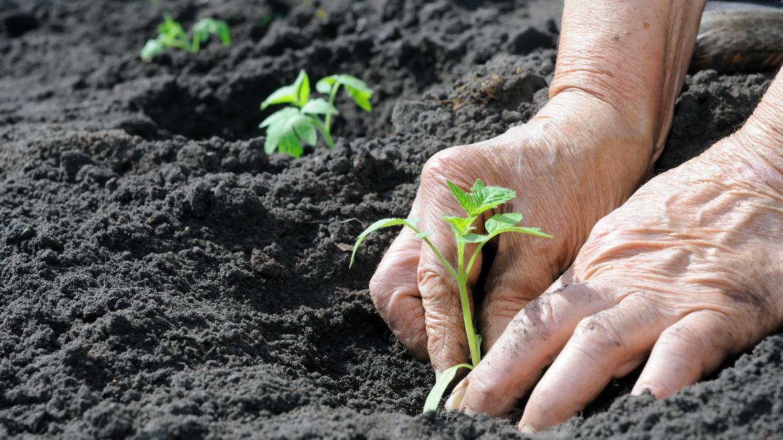 Mujer sembrando