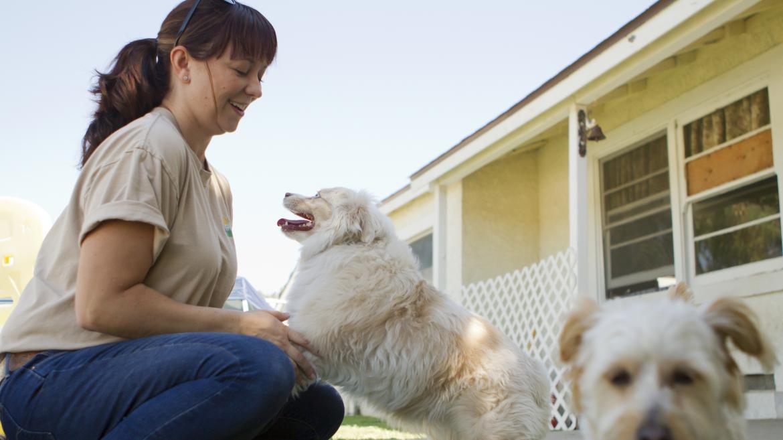 Mujer jugando con perros en centro de animales de compañía